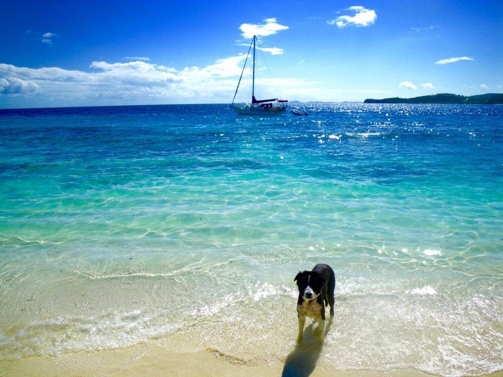 Jake on the Beach